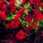 2014.12-7 Rose Noire ワンマン-349